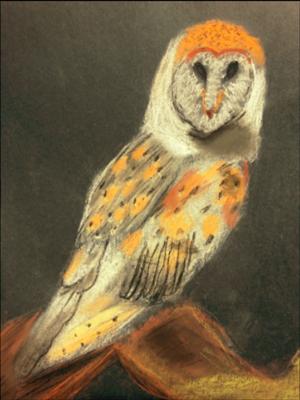 Lampien artwork - owl